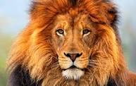 A memória do leão